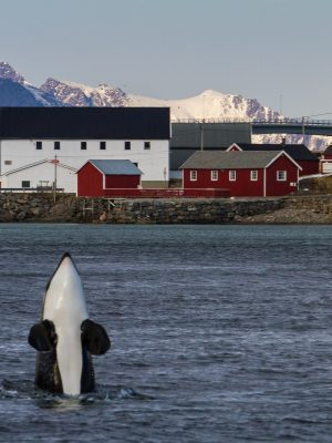 Behind the photo: Killerwhales!!!