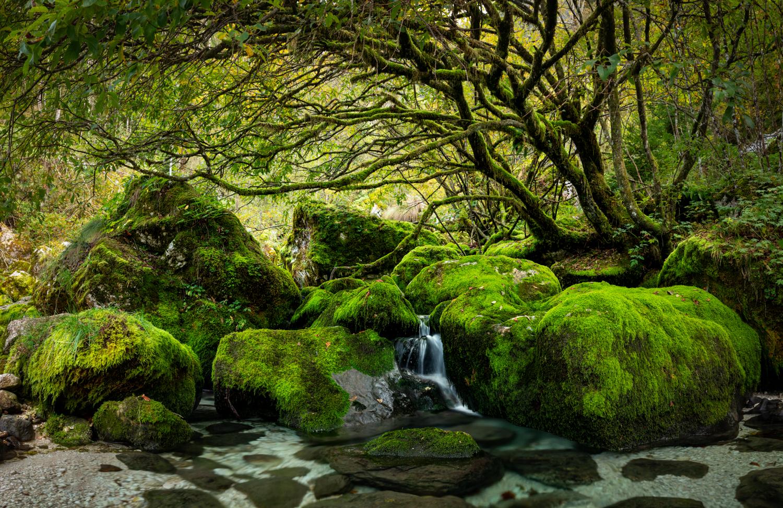 In het bos   Landschapsfotograaf Harmen Piekema