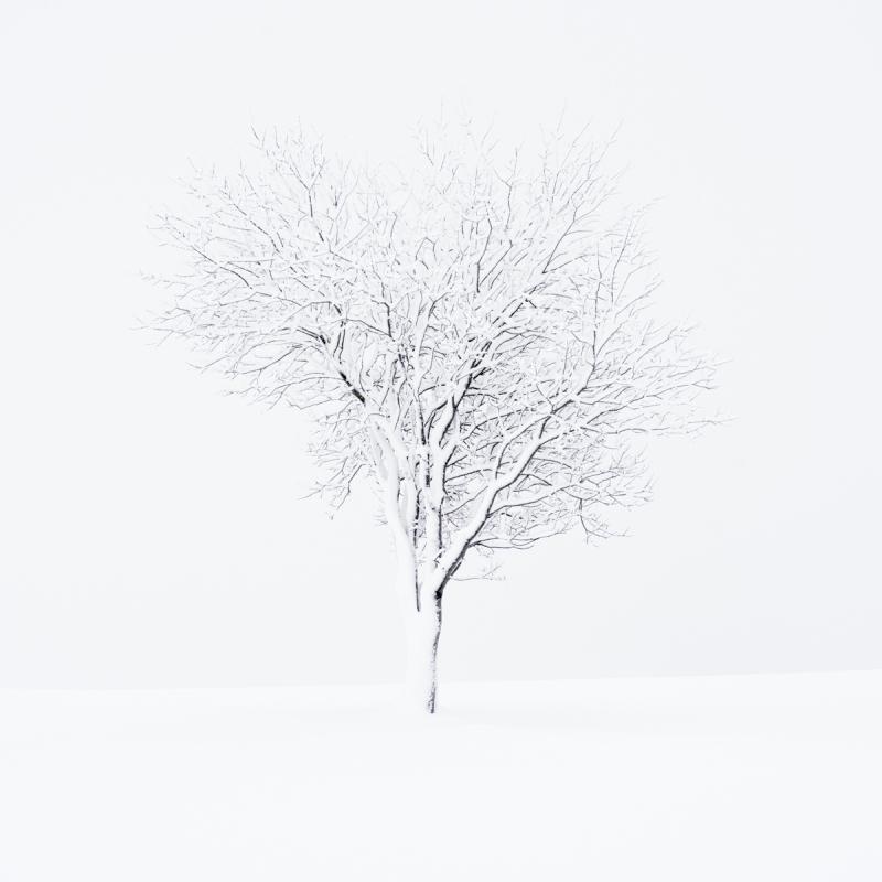 Simplicity door Groninger landschapsfotograaf Harmen Piekema