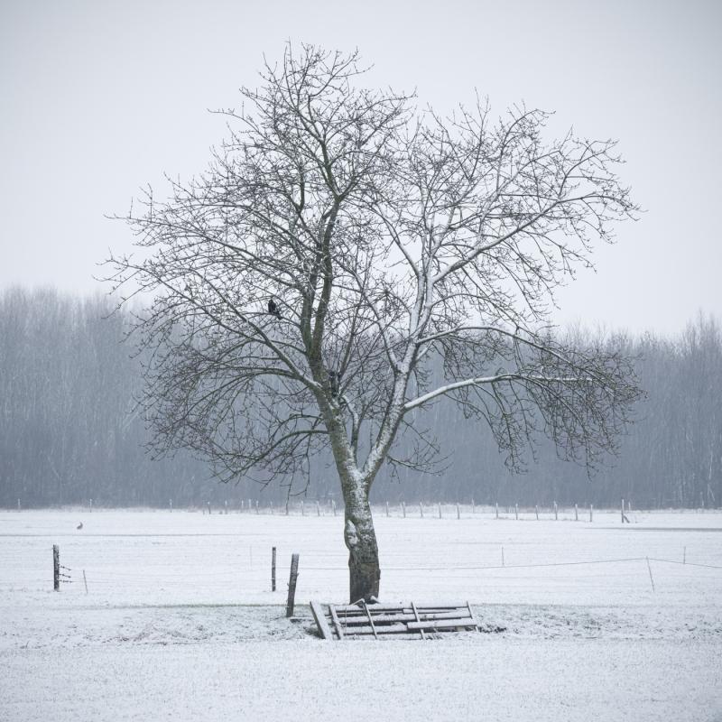 Snowshower door Groninger landschapsfotograaf Harmen Piekema
