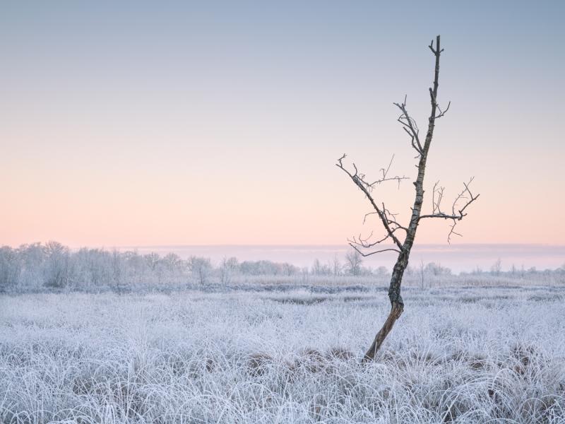 Frost door Groninger landschapsfotograaf Harmen Piekema